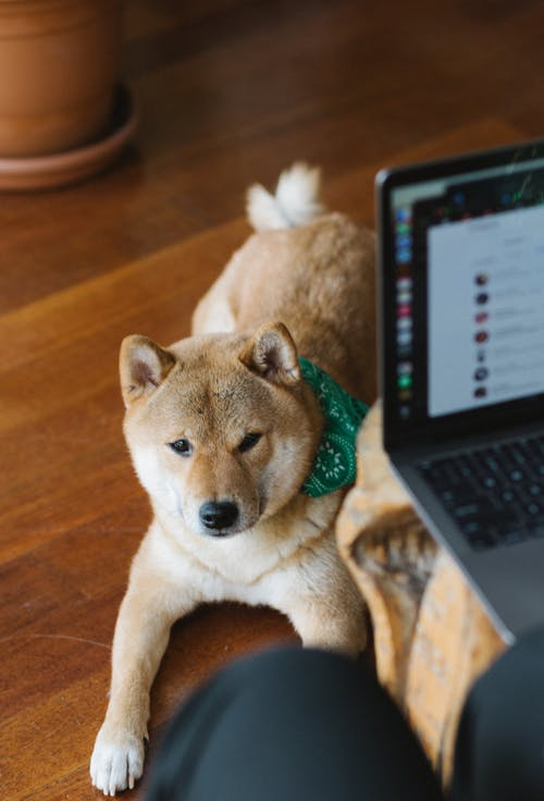 Cute dog lying on floor near owner working on laptop
