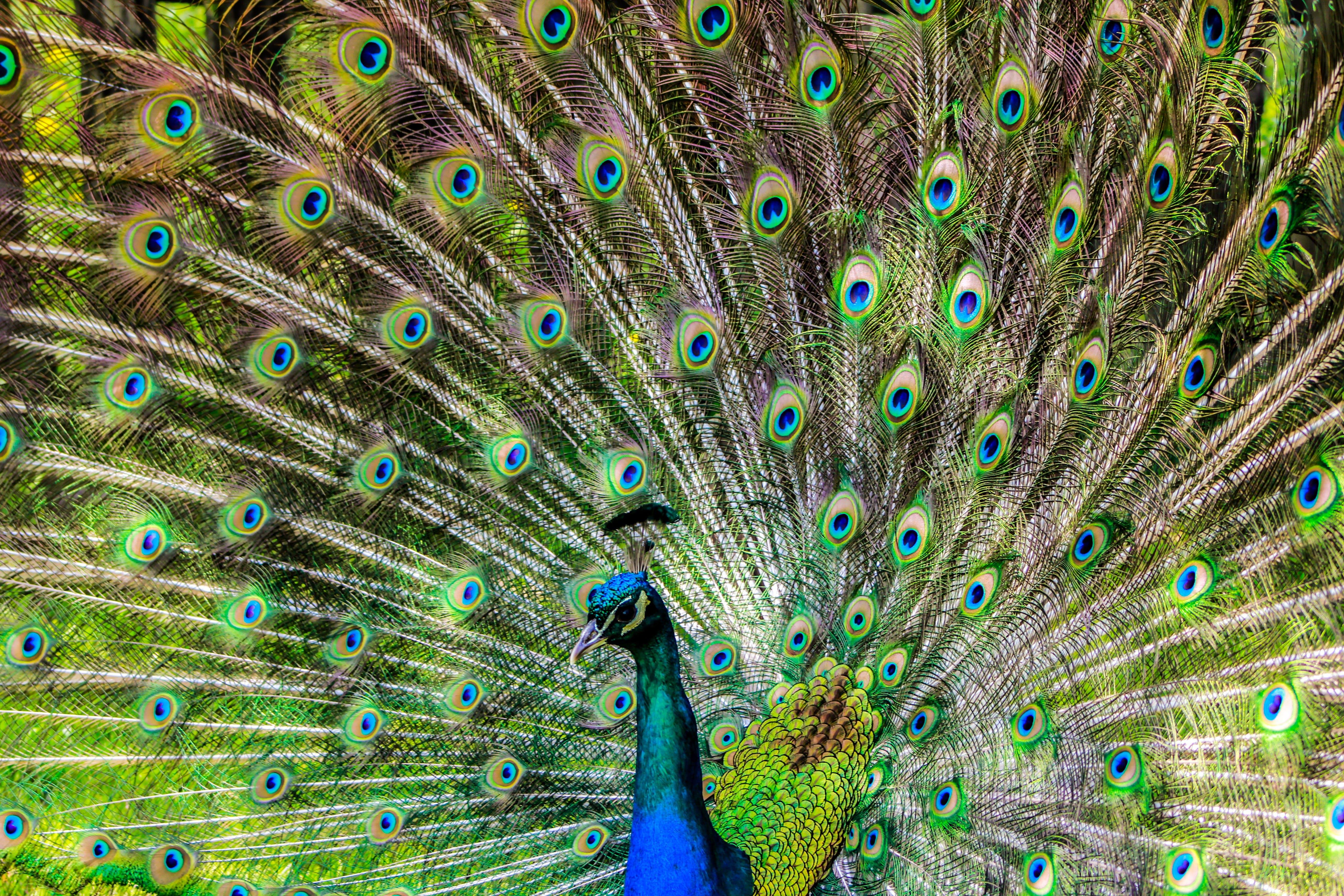 Photos gratuites de animal, animal sauvage, faune, fond d'écran gratuit