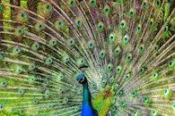 bird, animal, macro