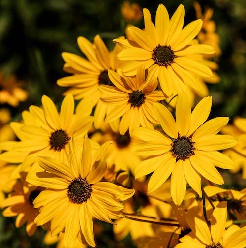 Immagine gratuita di bocciolo, fiori, flora, primo piano