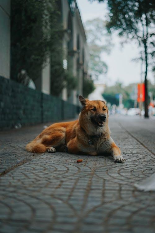 かわいい動物, かわいい犬, サイゴンの無料の写真素材
