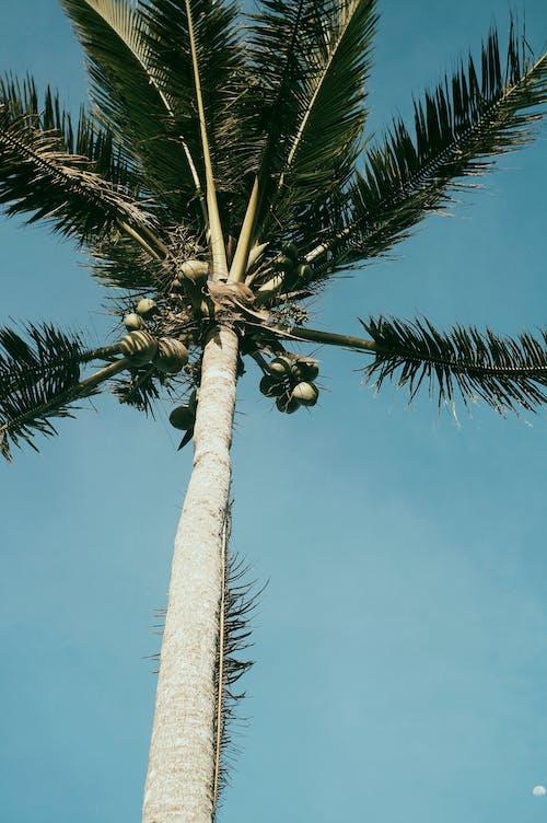 Tall palm with fresh green foliage