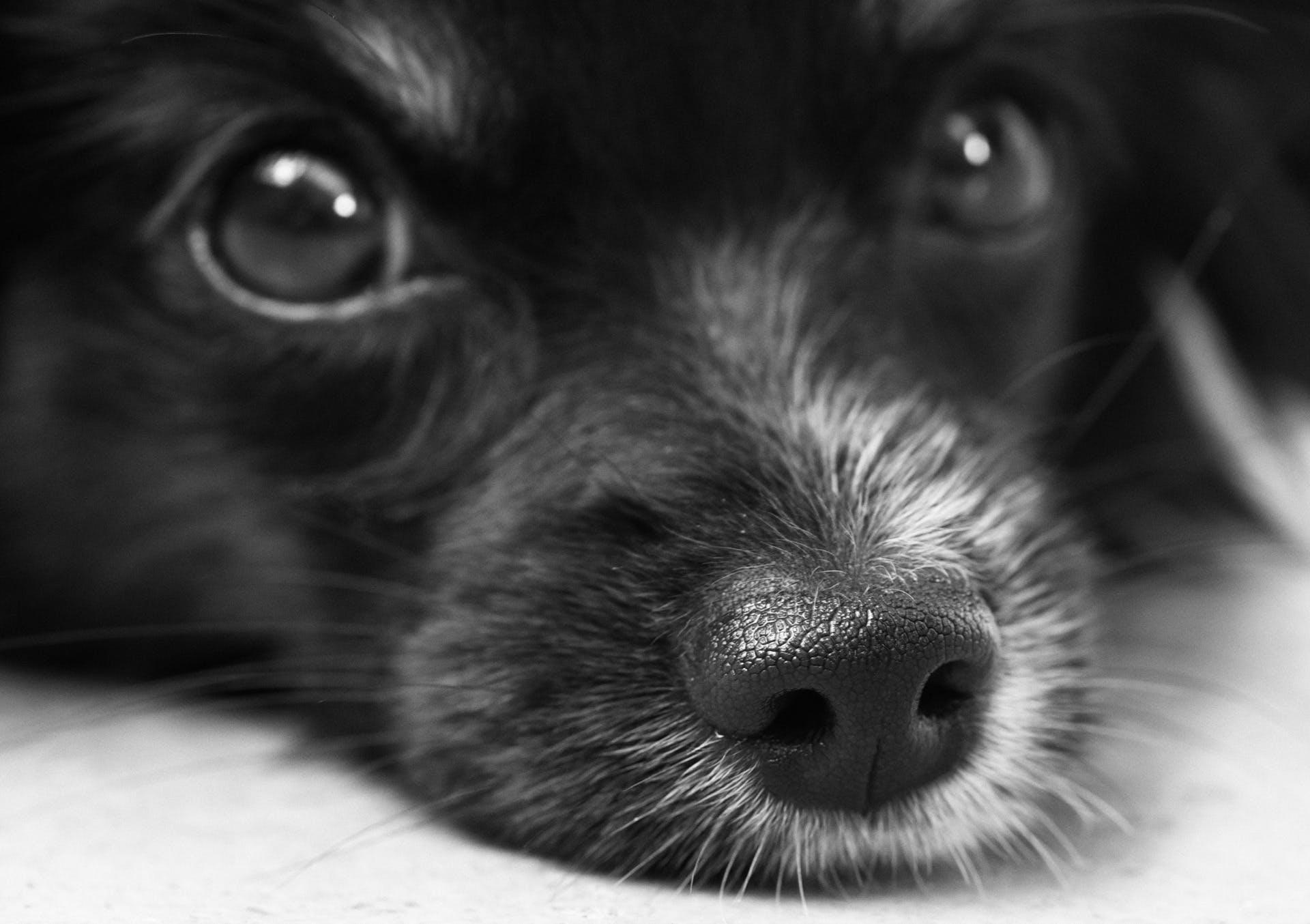 Shallow Photo of Black Dog