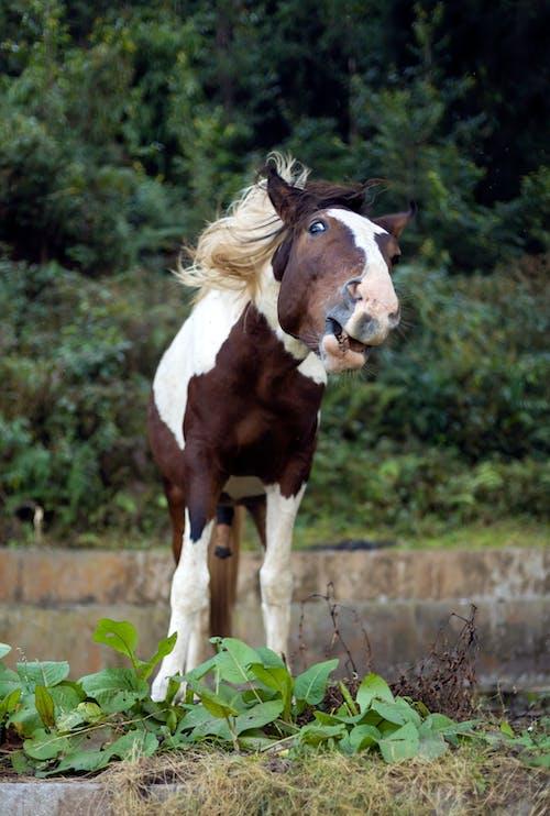 Fotos de stock gratuitas de animal, caballo, feliz