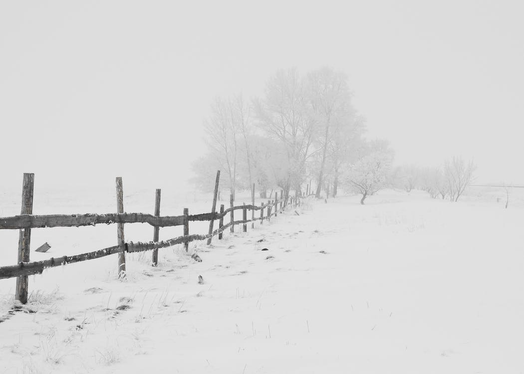 Black Wooden Fence on Snow Field at a Distance of Black Bare Trees