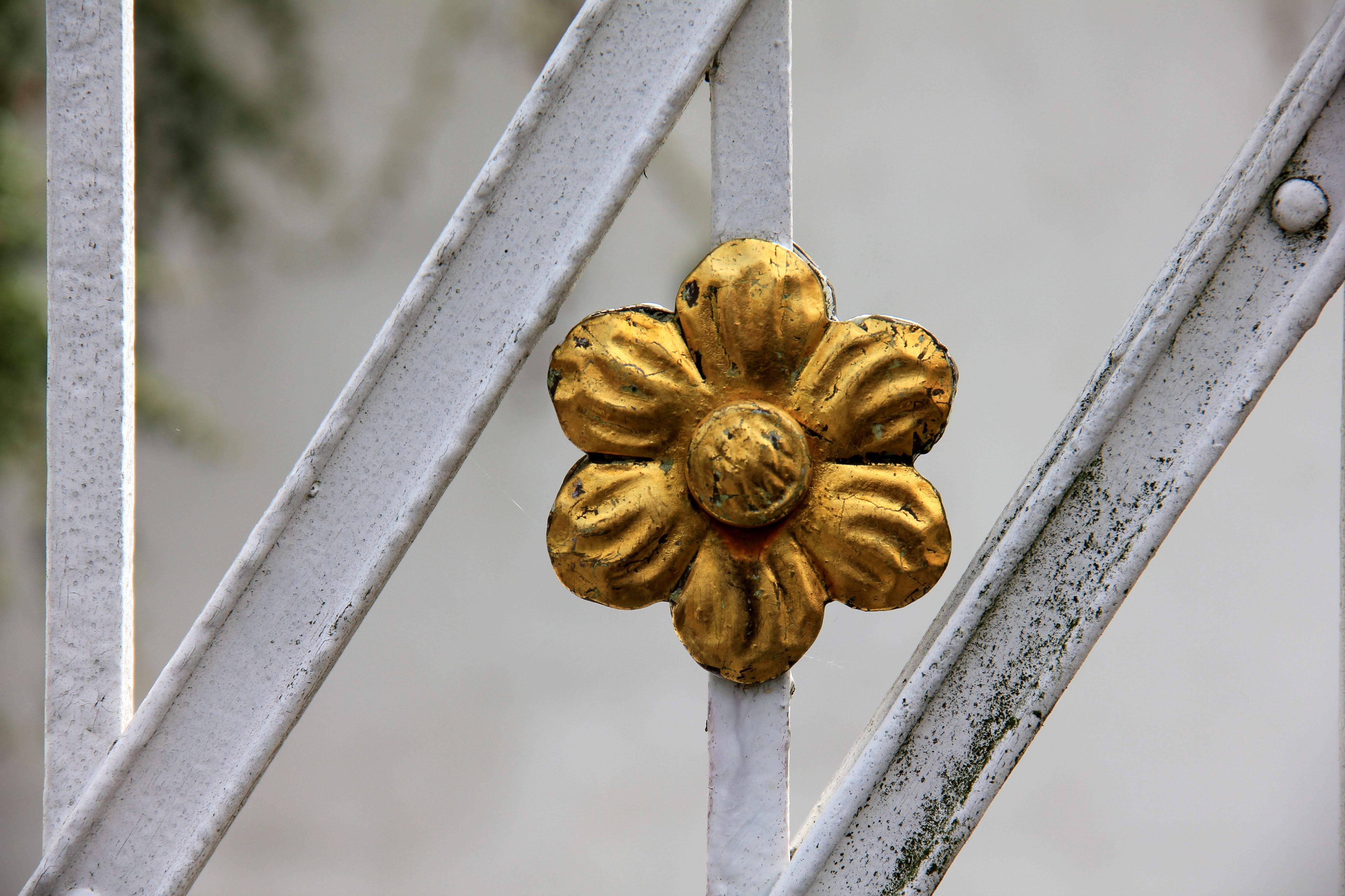 Free stock photo of metal, flower, gold