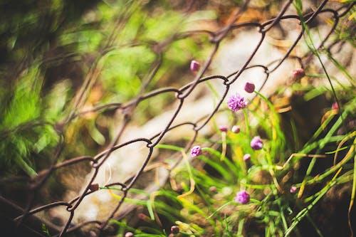Foto stok gratis alam, berbunga, berkembang, bunga