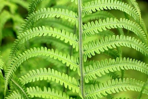 Darmowe zdjęcie z galerii z roślina, zielony