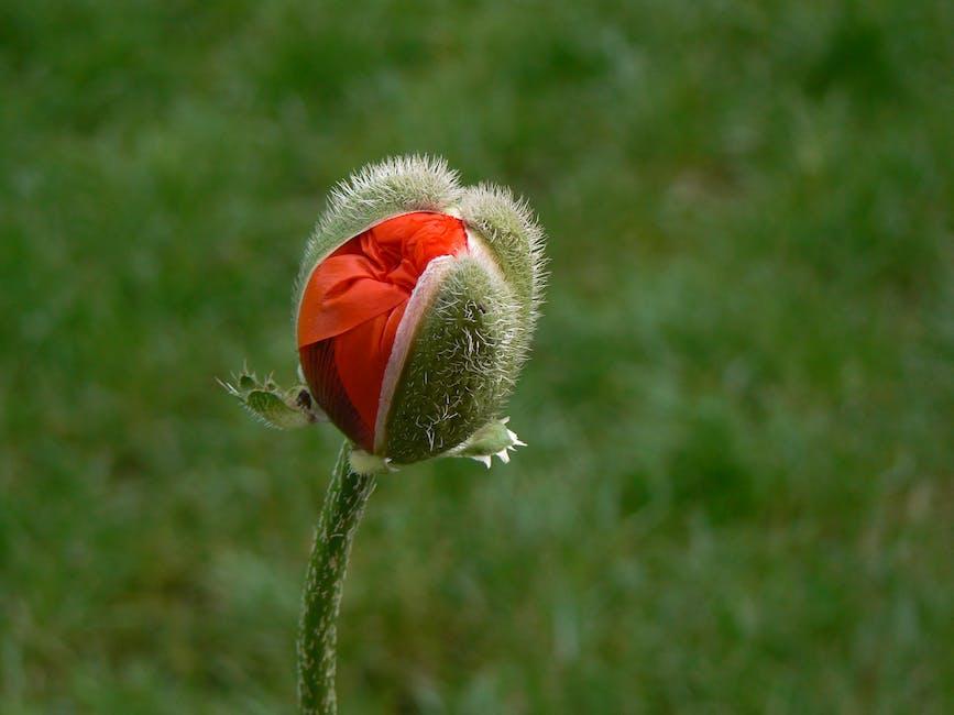 New free stock photo of plant, macro, blossom