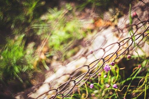 Foto stok gratis 55mm, alam, bunga, bunga-bunga