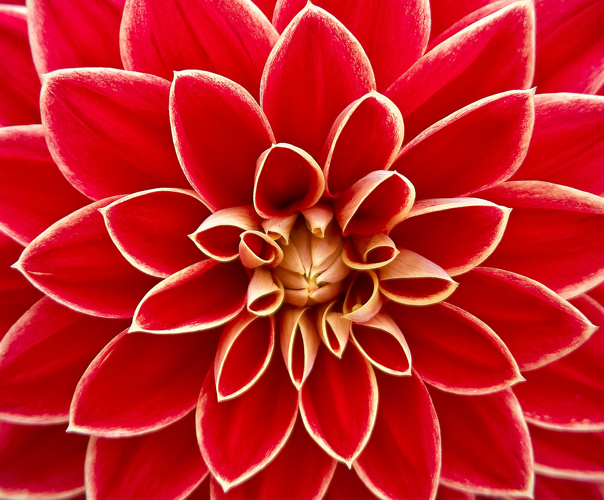 Image result for close up flowers