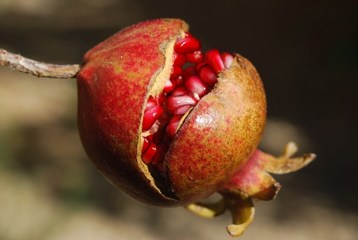 Brown and Red Round Fruit