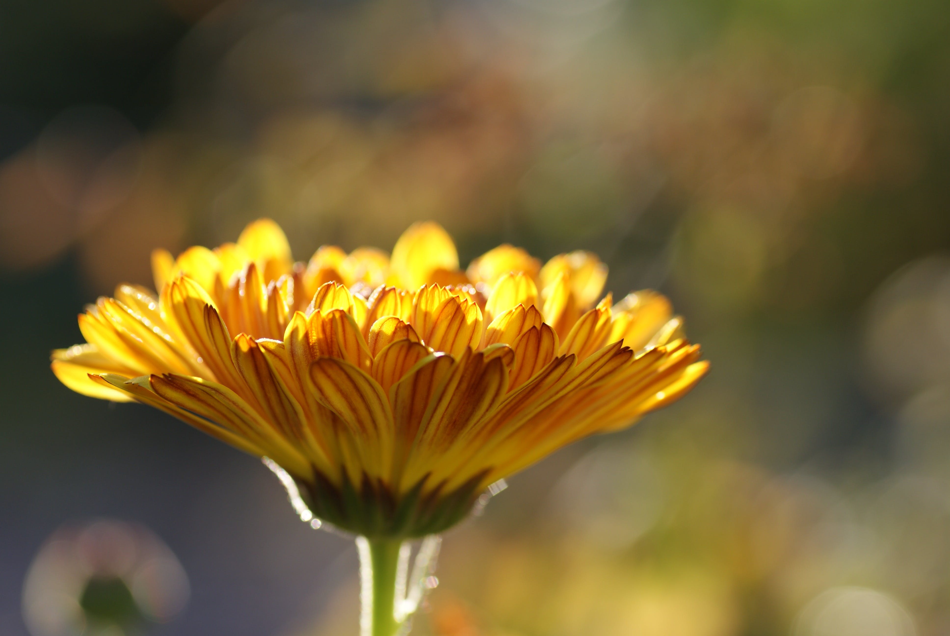 Macro Photography of Yellow Flower