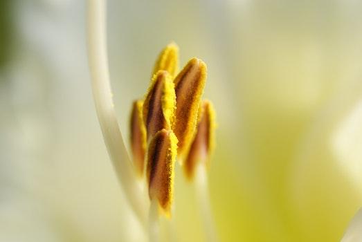 Kostenloses Stock Foto zu natur, pflanze, blühen, blüte