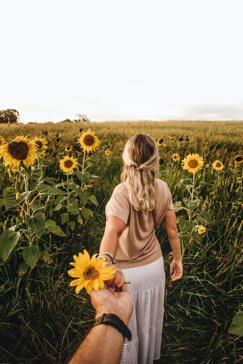 Free stock photo of beautiful, countryside, field
