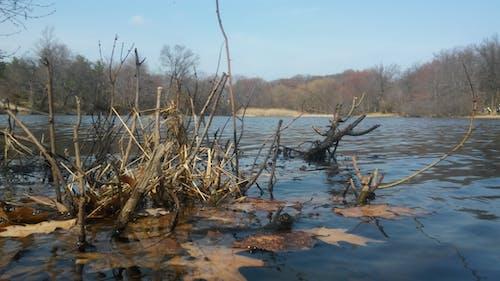 Foto d'estoc gratuïta de aigua, fotografia de la càmera lg g stylo., natura, planta