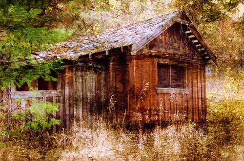 Free stock photo of shed, trees