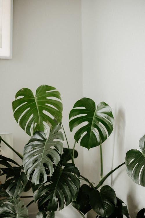 Green Plant Near White Wall