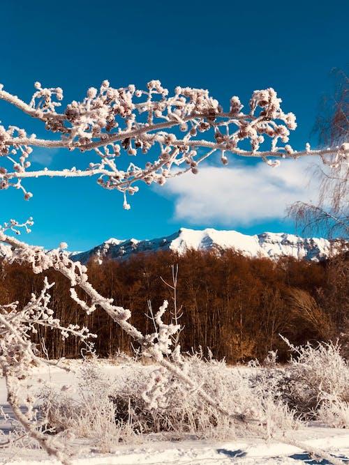 Free stock photo of alps, blue sky, cloud