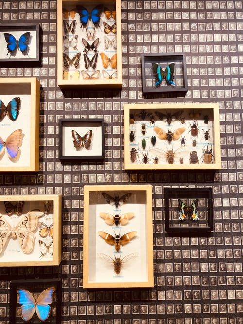 Free stock photo of butterflies, decor, insects