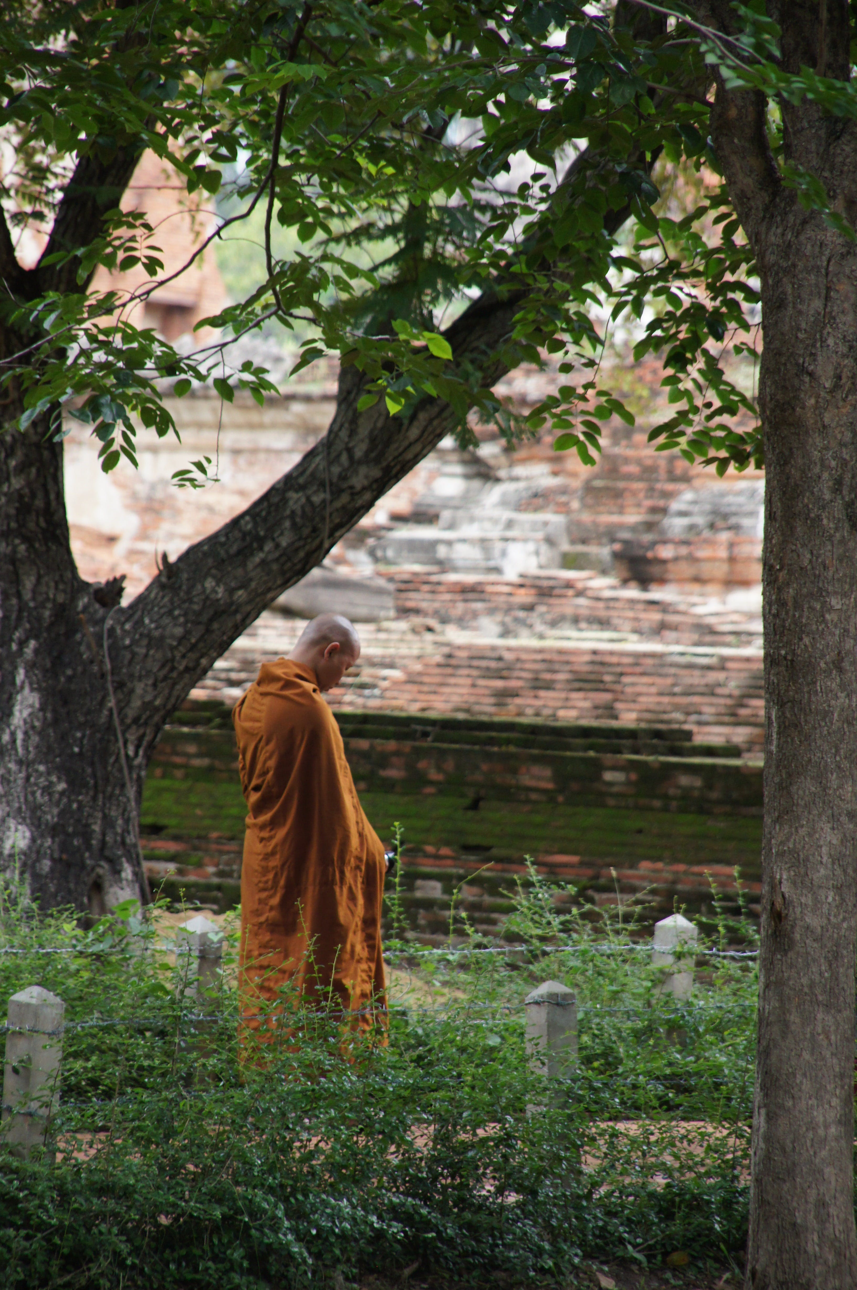 Free stock photo of orange, monastery, thailand, Buddhism