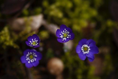 Ilmainen kuvapankkikuva tunnisteilla jousi, kasvikunta, kaunis