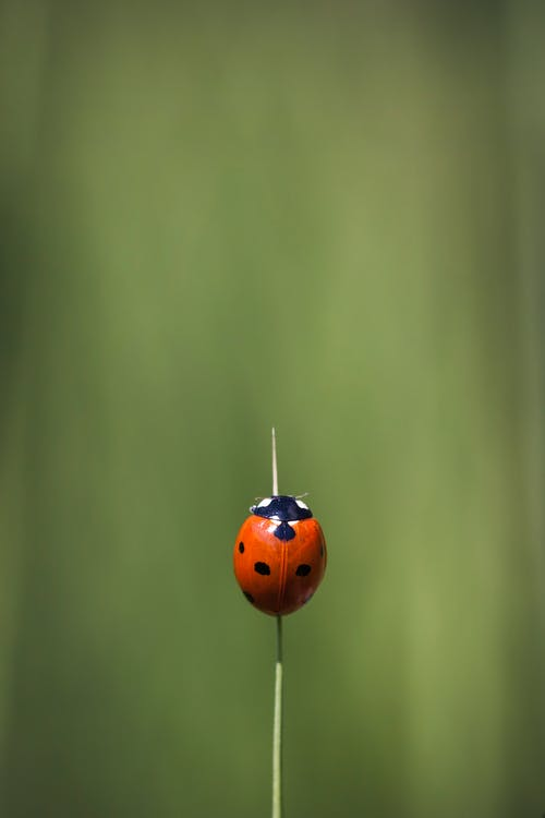Ilmainen kuvapankkikuva tunnisteilla biologia, hyönteinen, kasvikunta