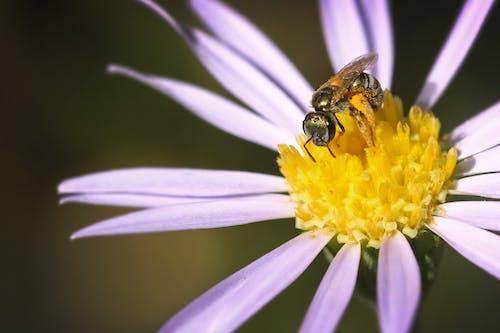 Ilmainen kuvapankkikuva tunnisteilla ampiainen, hunaja, hyönteinen