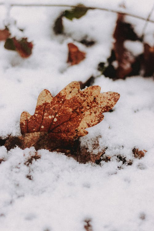 Faded tree leaf with spots and rounded edges on snowy terrain in wintertime on blurred background