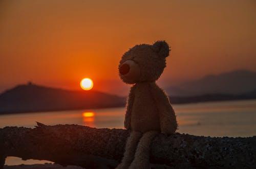 Free stock photo of coastline, landscape photography, sunset sky