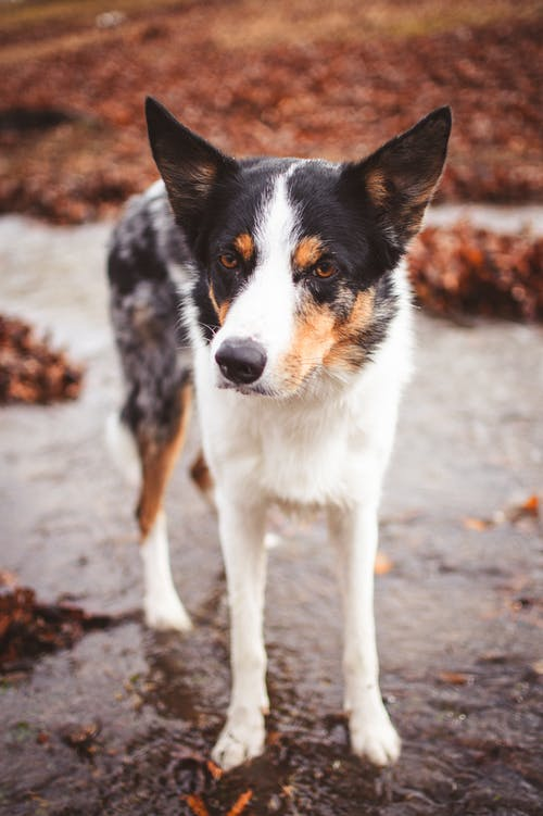 White Black and Brown Short Coated Dog