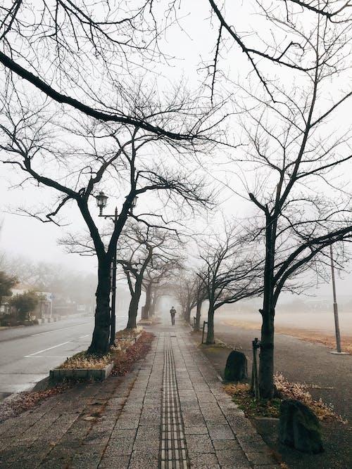 Ilmainen kuvapankkikuva tunnisteilla kävely, kuiva, kulkureitti