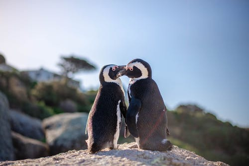 Black and White Penguins on Brown Rock
