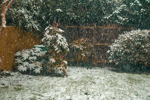 Free stock photo of snow, trees