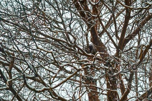 Free stock photo of snow trees