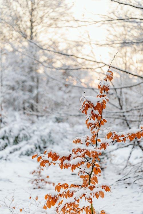 Photos gratuites de centrale, couvert de neige, hiver