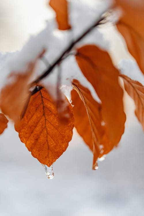 冬季, 垂直, 季節 的 免費圖庫相片