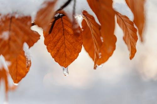 冬季, 天性, 季節 的 免費圖庫相片