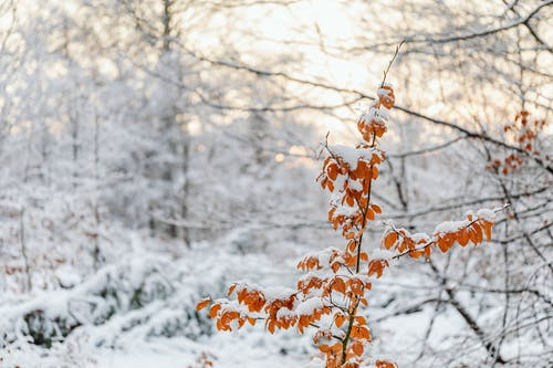 A Snow Covered Plant