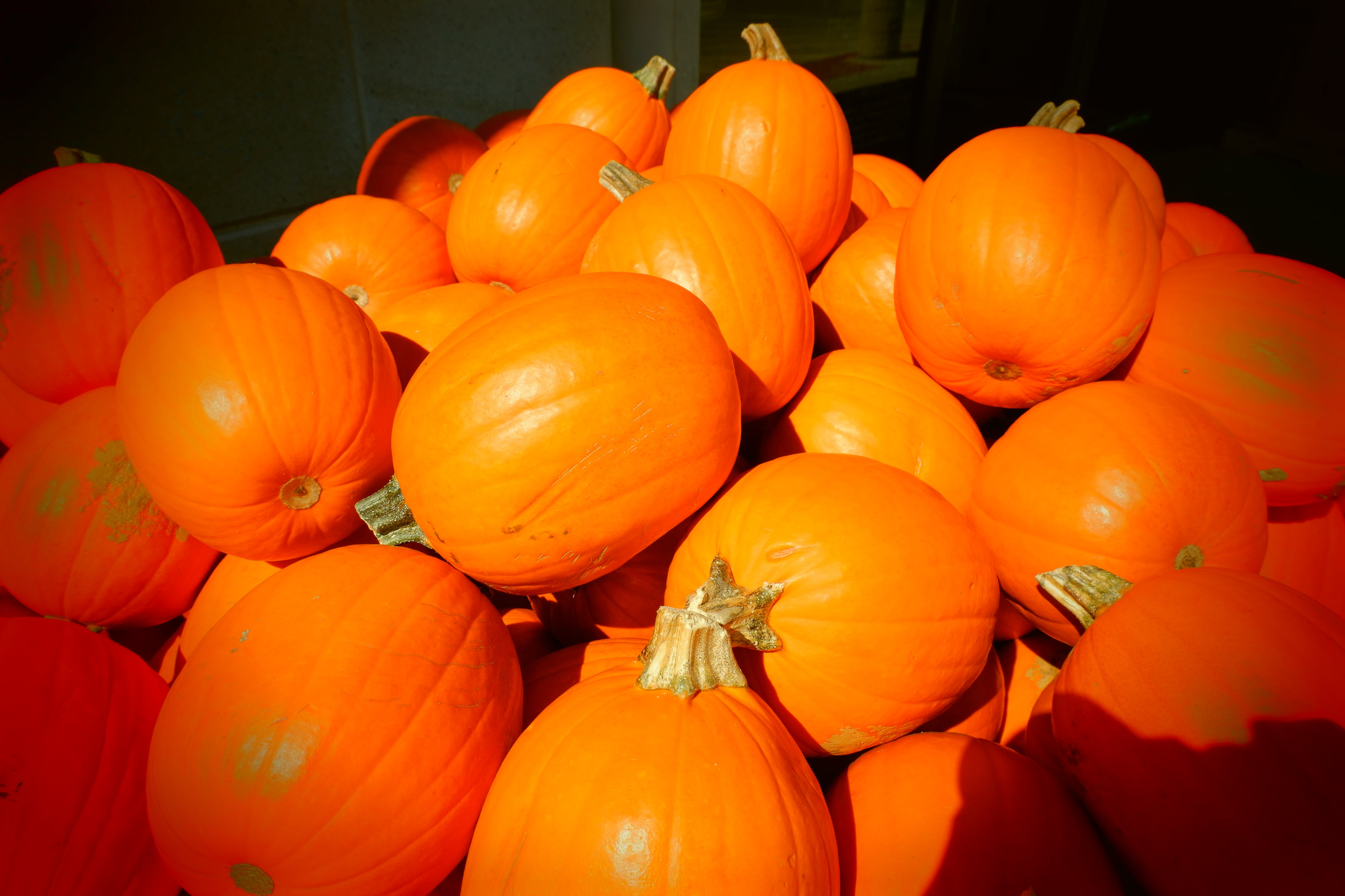 Pumpkin Lot