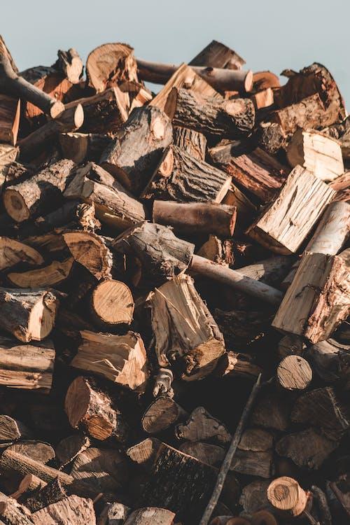 Immagine gratuita di alberi, assi, batch