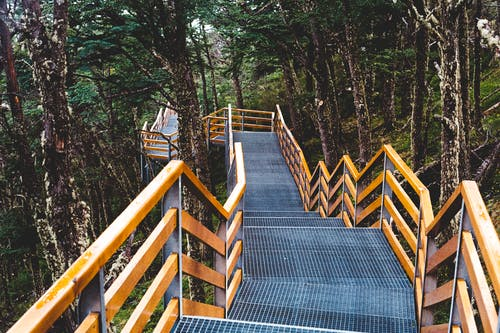Free stock photo of forest, path, pattern, stairs