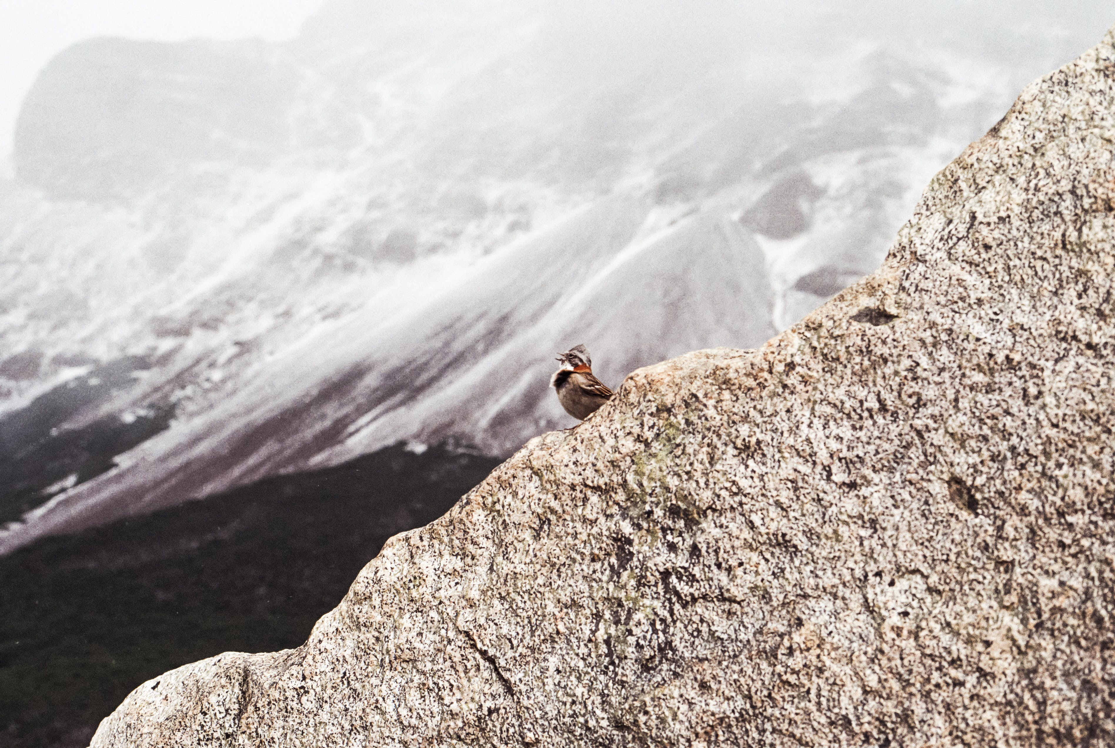 Gratis lagerfoto af 35 mm, analogt kamera, bjerge, Chile