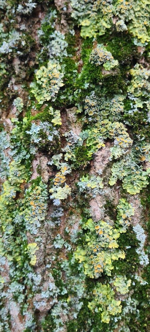 Free stock photo of bark, colorful, lichen