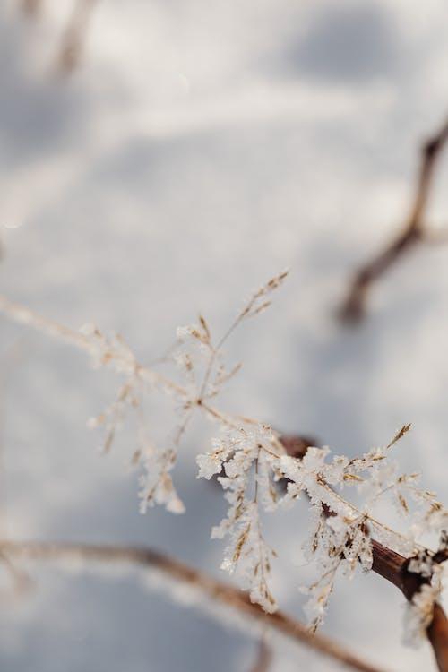 Imagine de stoc gratuită din adâncimea câmpului, arbore, cădere, congelat