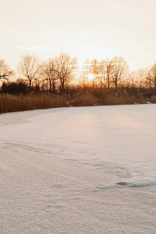 Imagine de stoc gratuită din apus, arbore, ceață, congelat