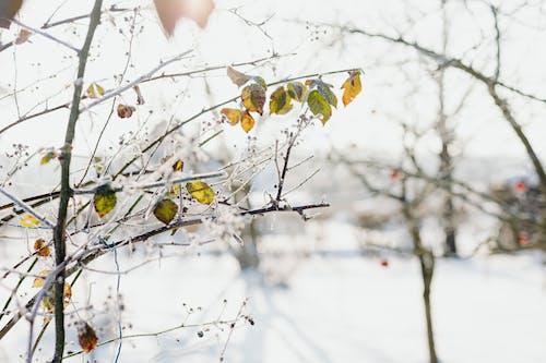 Imagine de stoc gratuită din anotimp, apple, arbore, cădere