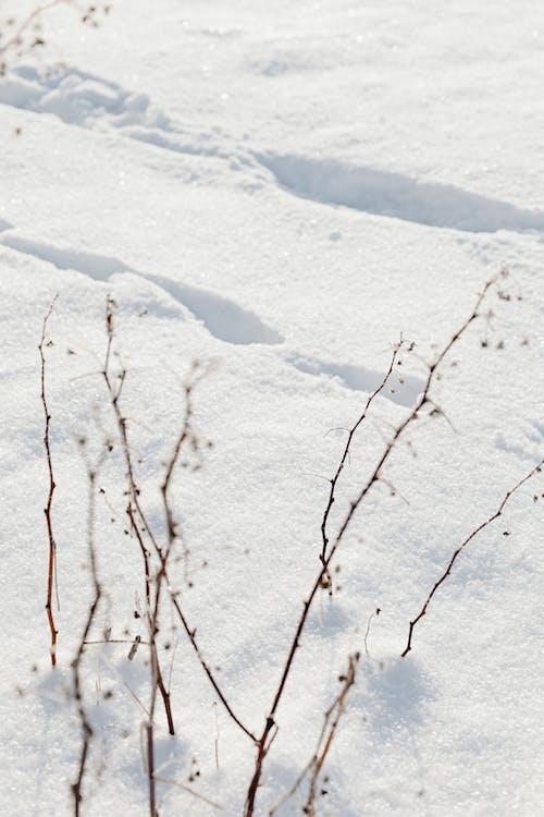 Imagine de stoc gratuită din anotimp, arbore, congelat, copac