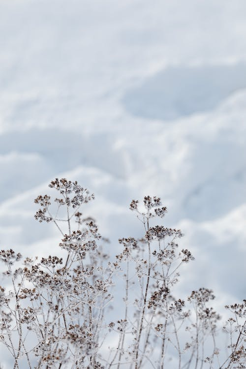 Imagine de stoc gratuită din arbore, cădere, ceață, copac