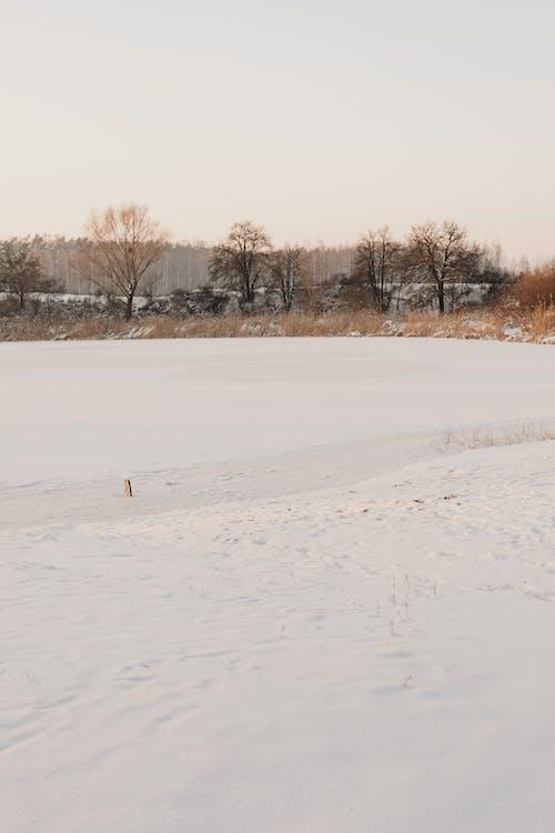 Imagine de stoc gratuită din anotimp, arbore, ceață, congelat